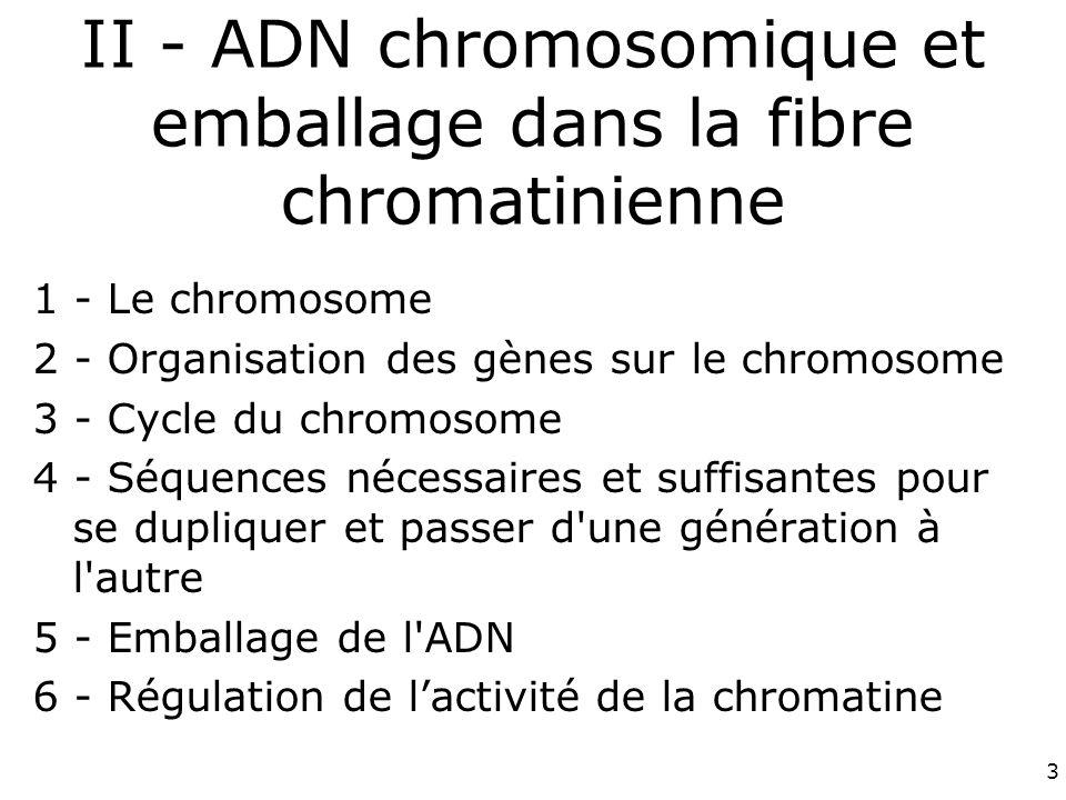 3 II - ADN chromosomique et emballage dans la fibre chromatinienne 1 - Le chromosome 2 - Organisation des gènes sur le chromosome 3 - Cycle du chromosome 4 - Séquences nécessaires et suffisantes pour se dupliquer et passer d une génération à l autre 5 - Emballage de l ADN 6 - Régulation de lactivité de la chromatine