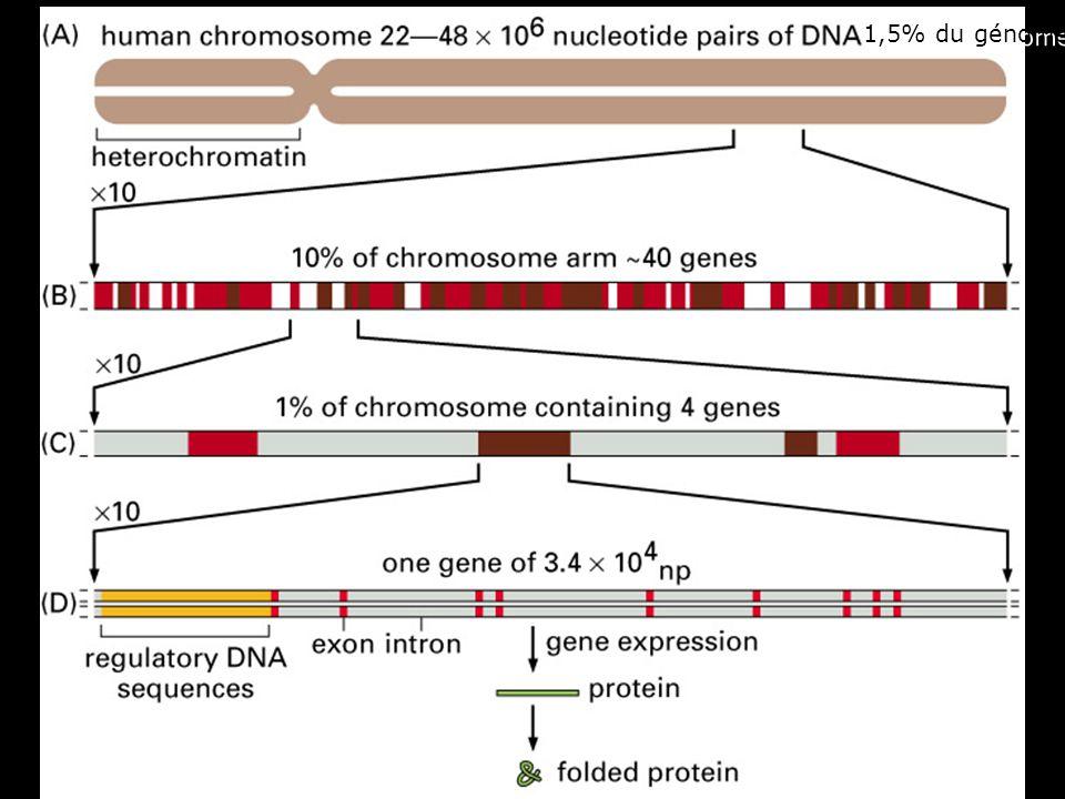 30 Fig 4-15 1,5% du génome