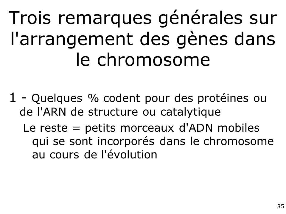 35 Trois remarques générales sur l arrangement des gènes dans le chromosome 1 - Quelques % codent pour des protéines ou de l ARN de structure ou catalytique Le reste = petits morceaux d ADN mobiles qui se sont incorporés dans le chromosome au cours de l évolution