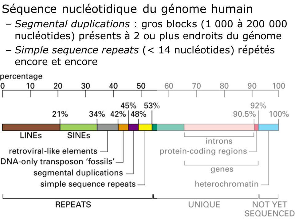 38 Fig 4-17 Séquence nucléotidique du génome humain –Segmental duplications : gros blocks (1 000 à 200 000 nucléotides) présents à 2 ou plus endroits du génome –Simple sequence repeats (< 14 nucléotides) répétés encore et encore