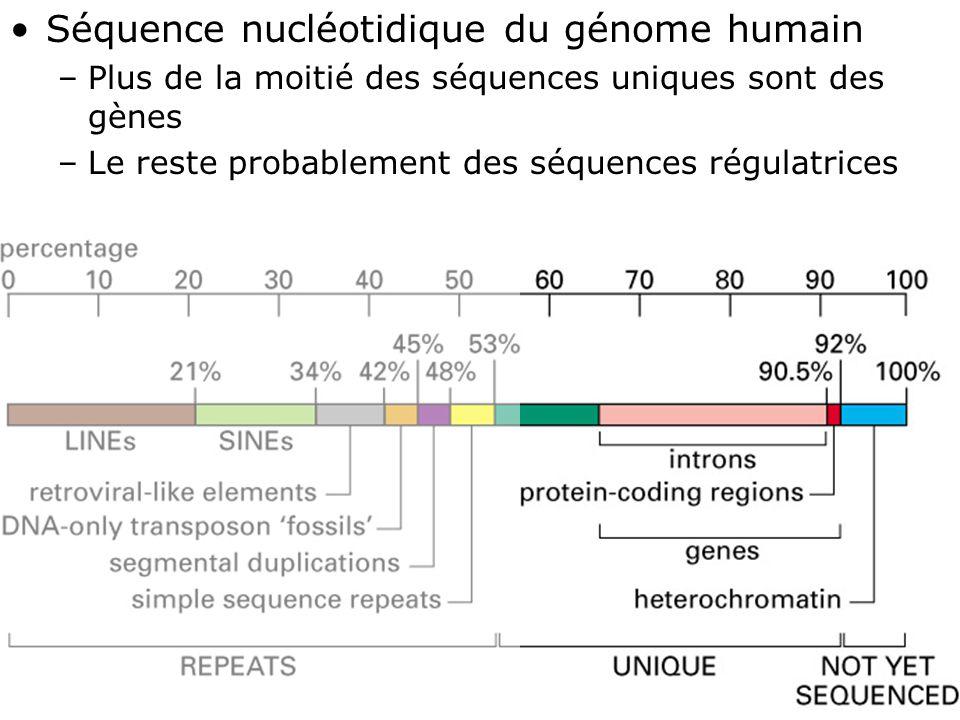 39 Fig 4-17 Séquence nucléotidique du génome humain –Plus de la moitié des séquences uniques sont des gènes –Le reste probablement des séquences régulatrices