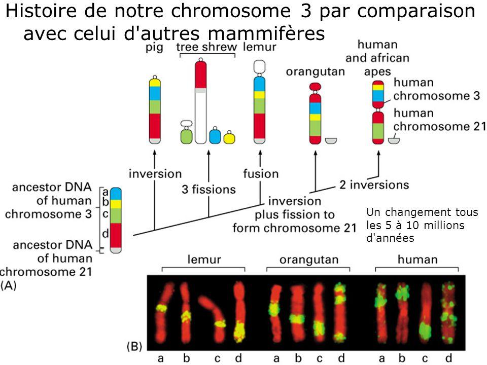44 Fig 4-19 Histoire de notre chromosome 3 par comparaison avec celui d autres mammifères Un changement tous les 5 à 10 millions d années