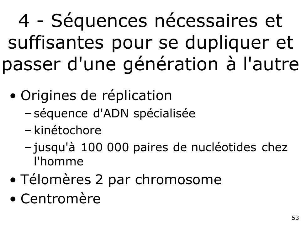 53 4 - Séquences nécessaires et suffisantes pour se dupliquer et passer d une génération à l autre Origines de réplication –séquence d ADN spécialisée –kinétochore –jusqu à 100 000 paires de nucléotides chez l homme Télomères 2 par chromosome Centromère