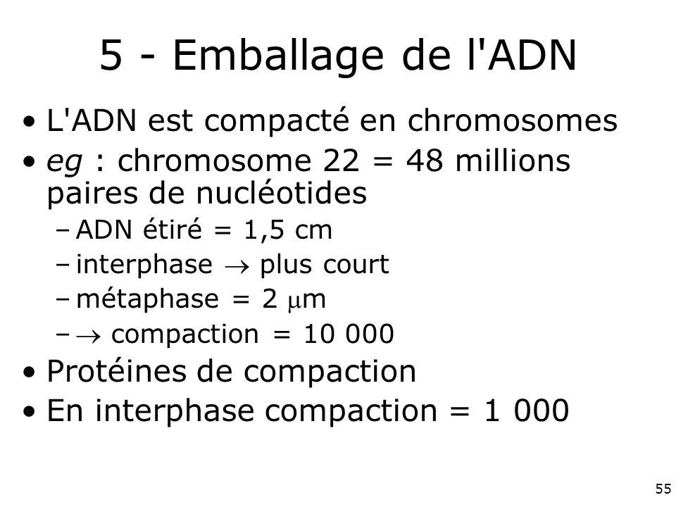 55 5 - Emballage de l ADN L ADN est compacté en chromosomes eg : chromosome 22 = 48 millions paires de nucléotides –ADN étiré = 1,5 cm –interphase plus court –métaphase = 2 m – compaction = 10 000 Protéines de compaction En interphase compaction = 1 000
