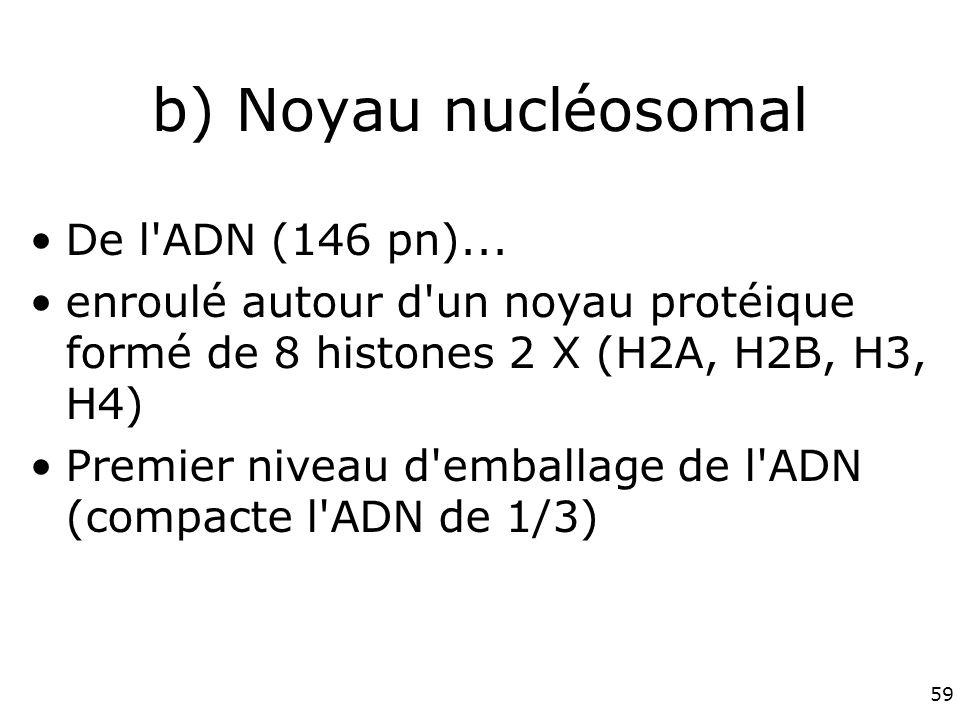59 b) Noyau nucléosomal De l ADN (146 pn)...