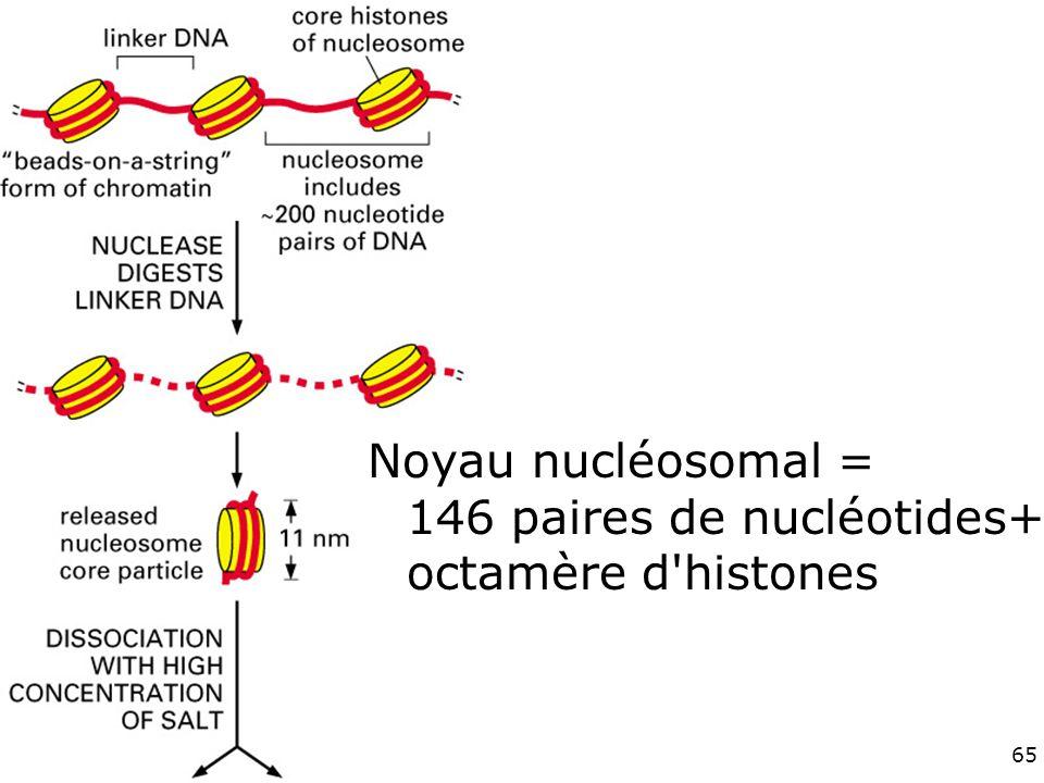 65 Fig 4-24haut Noyau nucléosomal = 146 paires de nucléotides+ octamère d histones