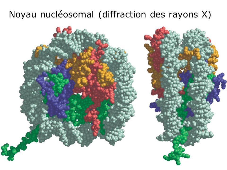 70 Fig 4-25 Noyau nucléosomal (diffraction des rayons X)