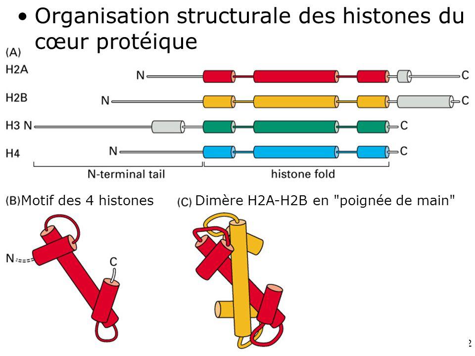 72 Fig 4-26 Dimère H2A-H2B en poignée de main Motif des 4 histones Organisation structurale des histones du cœur protéique