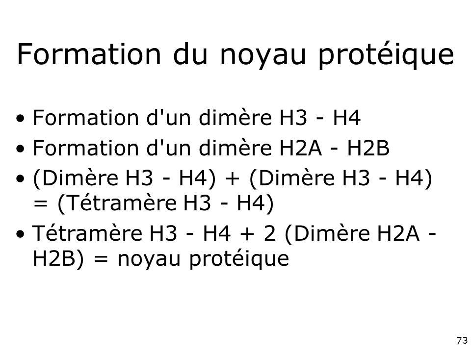 73 Formation du noyau protéique Formation d un dimère H3 - H4 Formation d un dimère H2A - H2B (Dimère H3 - H4) + (Dimère H3 - H4) = (Tétramère H3 - H4) Tétramère H3 - H4 + 2 (Dimère H2A - H2B) = noyau protéique