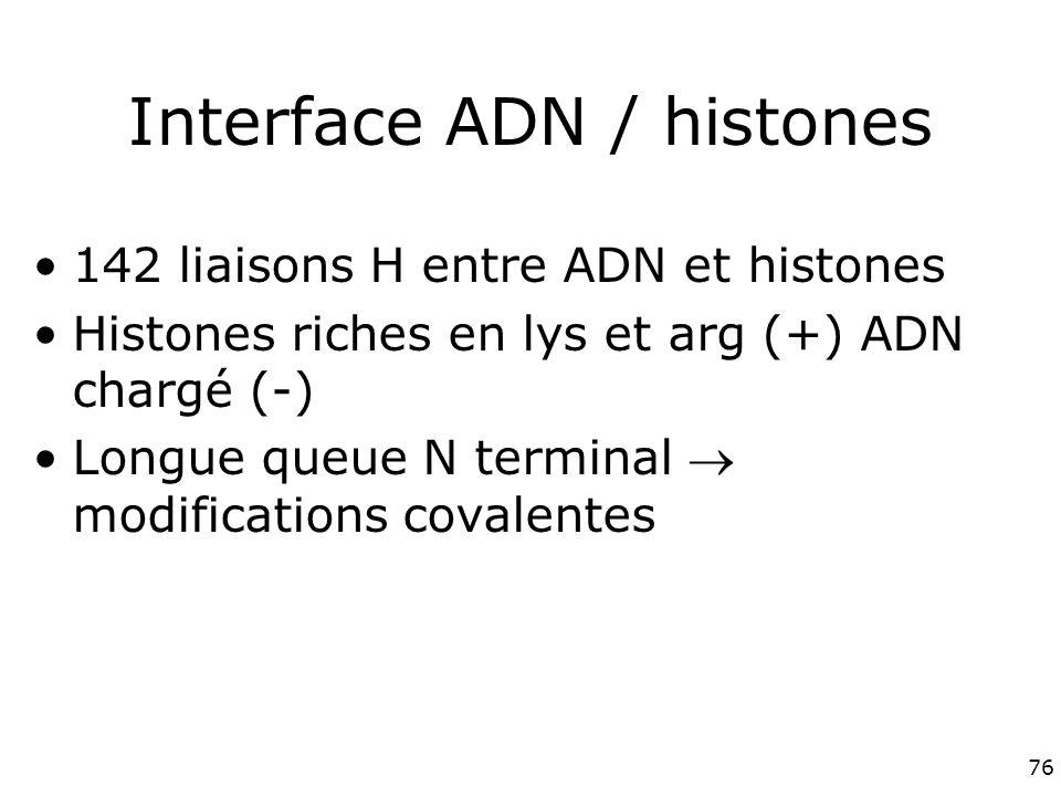 76 Interface ADN / histones 142 liaisons H entre ADN et histones Histones riches en lys et arg (+) ADN chargé (-) Longue queue N terminal modifications covalentes