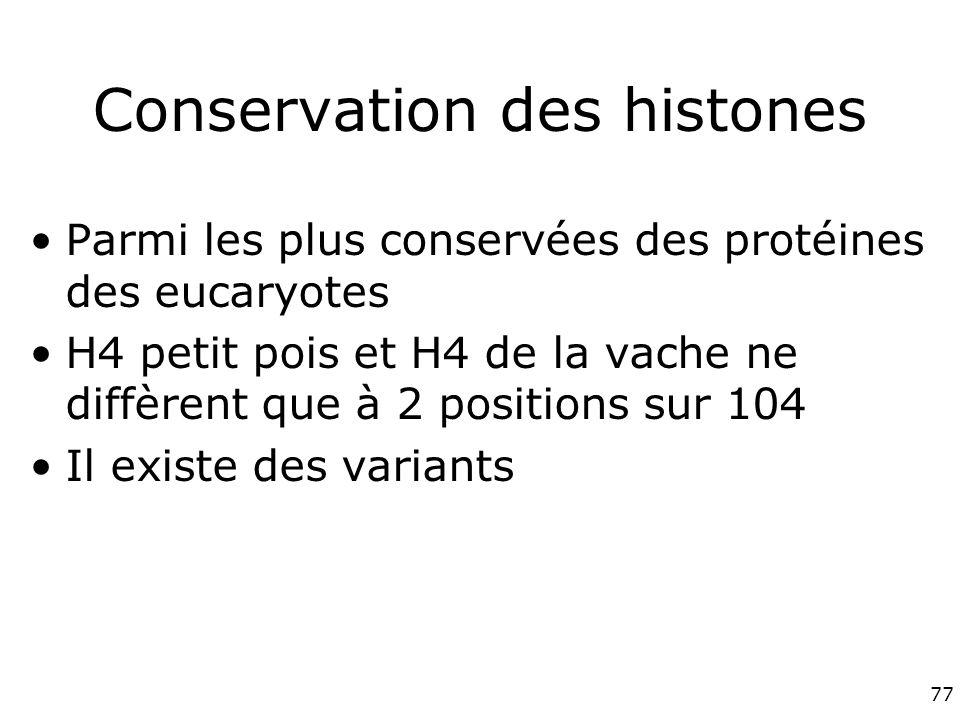 77 Conservation des histones Parmi les plus conservées des protéines des eucaryotes H4 petit pois et H4 de la vache ne diffèrent que à 2 positions sur 104 Il existe des variants
