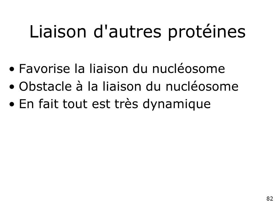 82 Liaison d autres protéines Favorise la liaison du nucléosome Obstacle à la liaison du nucléosome En fait tout est très dynamique