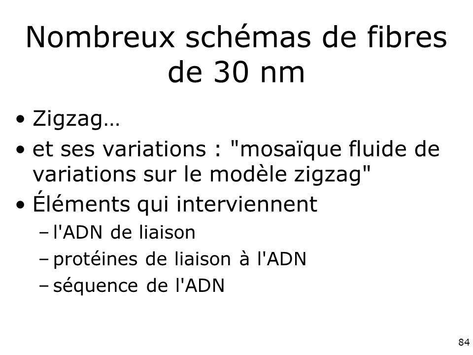 84 Nombreux schémas de fibres de 30 nm Zigzag… et ses variations : mosaïque fluide de variations sur le modèle zigzag Éléments qui interviennent –l ADN de liaison –protéines de liaison à l ADN –séquence de l ADN
