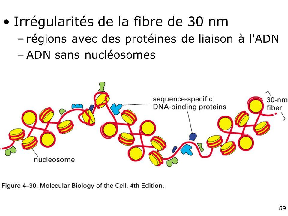 89 Fig 4-30 Irrégularités de la fibre de 30 nm –régions avec des protéines de liaison à l ADN –ADN sans nucléosomes