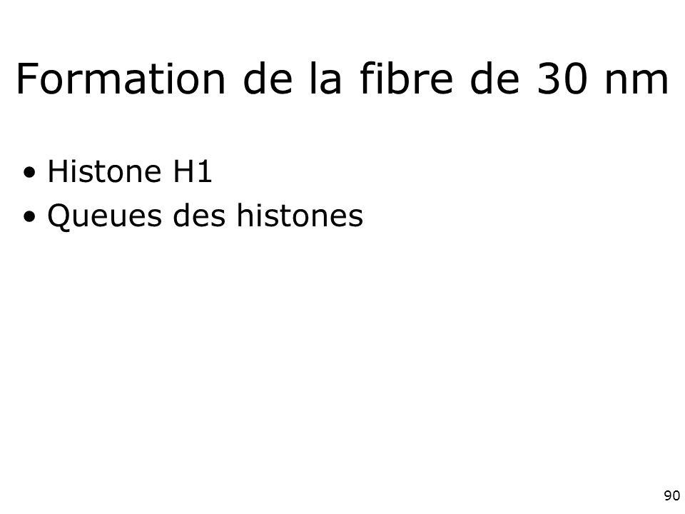 90 Formation de la fibre de 30 nm Histone H1 Queues des histones