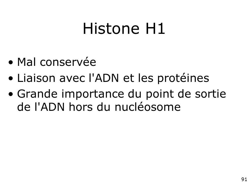 91 Histone H1 Mal conservée Liaison avec l ADN et les protéines Grande importance du point de sortie de l ADN hors du nucléosome