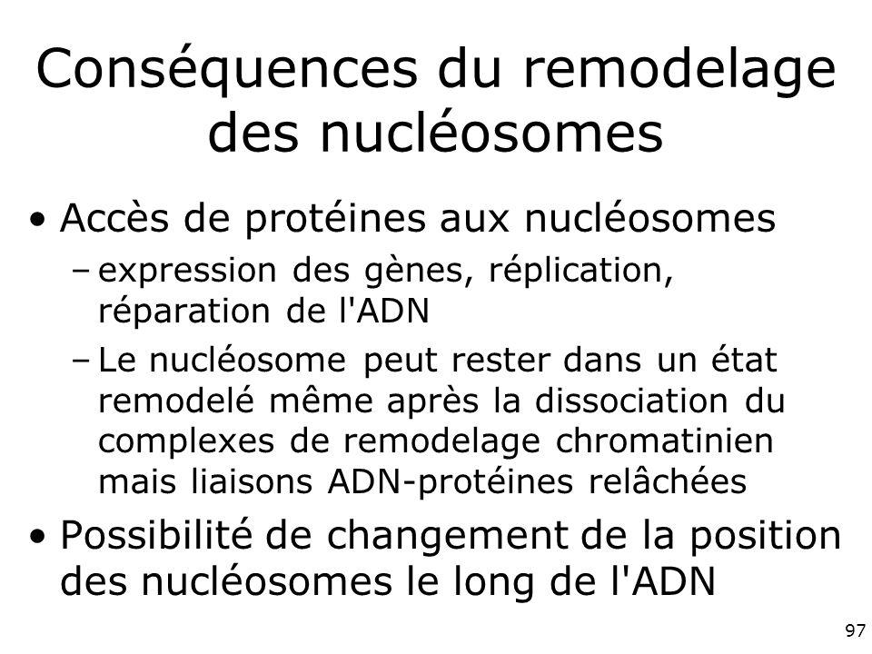 97 Conséquences du remodelage des nucléosomes Accès de protéines aux nucléosomes –expression des gènes, réplication, réparation de l ADN –Le nucléosome peut rester dans un état remodelé même après la dissociation du complexes de remodelage chromatinien mais liaisons ADN-protéines relâchées Possibilité de changement de la position des nucléosomes le long de l ADN