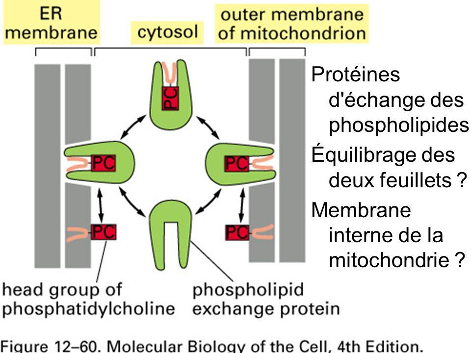 Fig 12-60 Protéines d échange des phospholipides Équilibrage des deux feuillets .