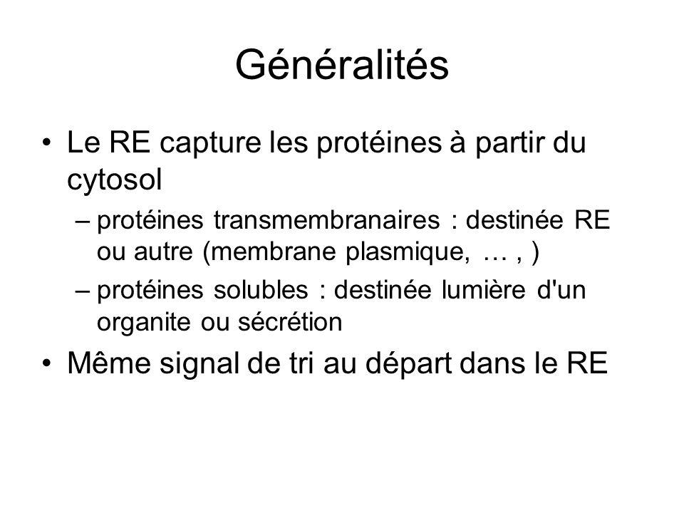 Généralités Le RE capture les protéines à partir du cytosol –protéines transmembranaires : destinée RE ou autre (membrane plasmique, …, ) –protéines solubles : destinée lumière d un organite ou sécrétion Même signal de tri au départ dans le RE