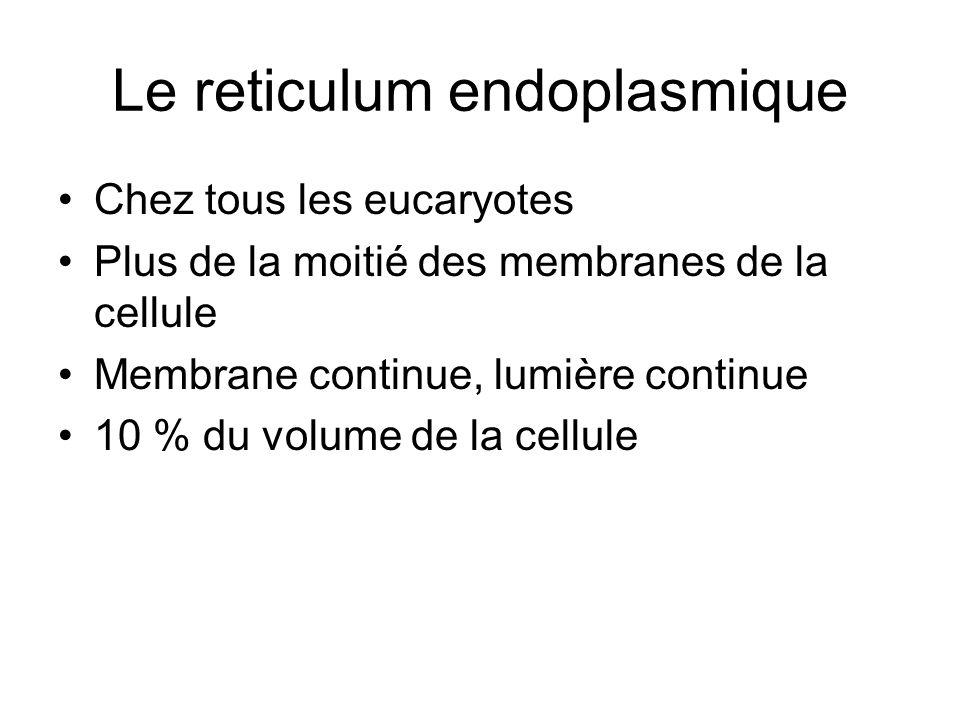 Le reticulum endoplasmique Chez tous les eucaryotes Plus de la moitié des membranes de la cellule Membrane continue, lumière continue 10 % du volume de la cellule