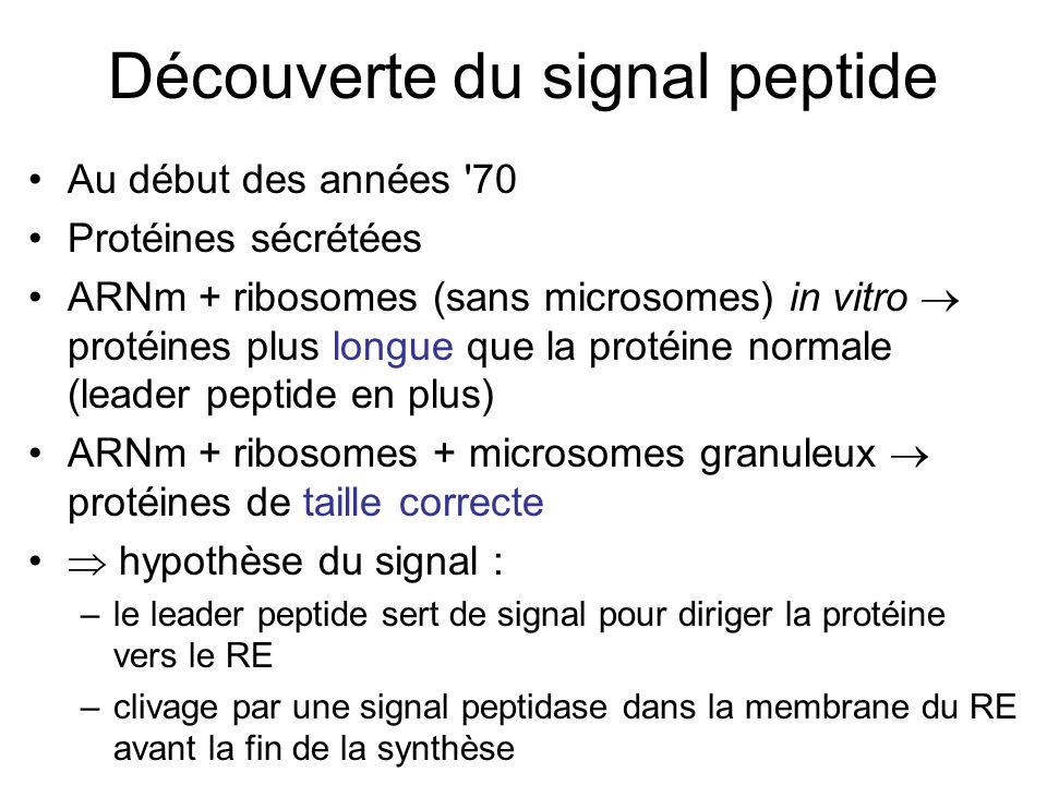 Découverte du signal peptide Au début des années 70 Protéines sécrétées ARNm + ribosomes (sans microsomes) in vitro protéines plus longue que la protéine normale (leader peptide en plus) ARNm + ribosomes + microsomes granuleux protéines de taille correcte hypothèse du signal : –le leader peptide sert de signal pour diriger la protéine vers le RE –clivage par une signal peptidase dans la membrane du RE avant la fin de la synthèse
