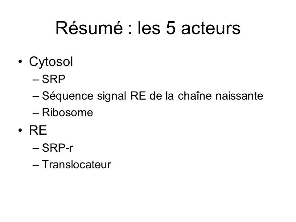 Résumé : les 5 acteurs Cytosol –SRP –Séquence signal RE de la chaîne naissante –Ribosome RE –SRP-r –Translocateur