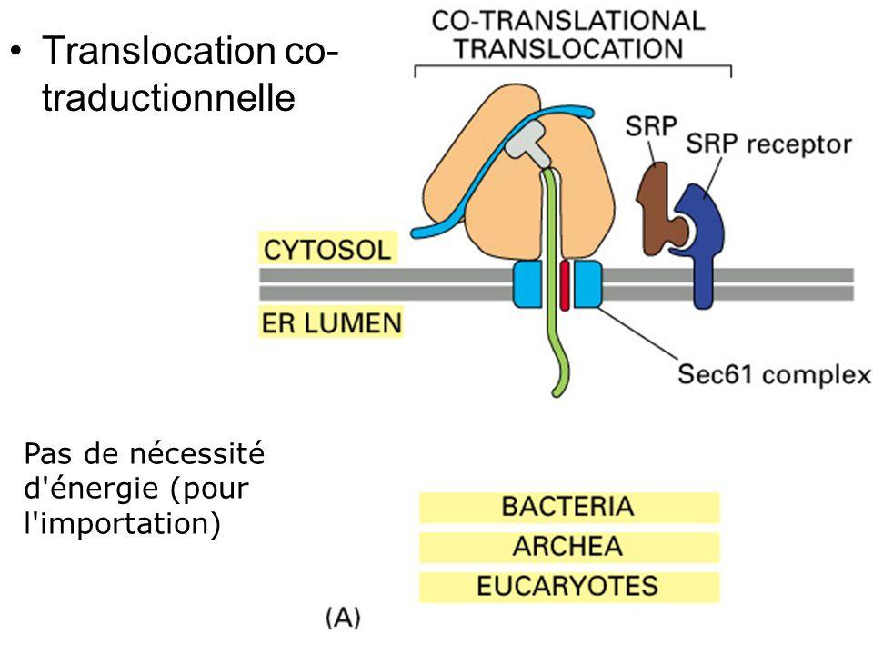 Fig 12-45(A) Translocation co- traductionnelle Pas de nécessité d énergie (pour l importation)