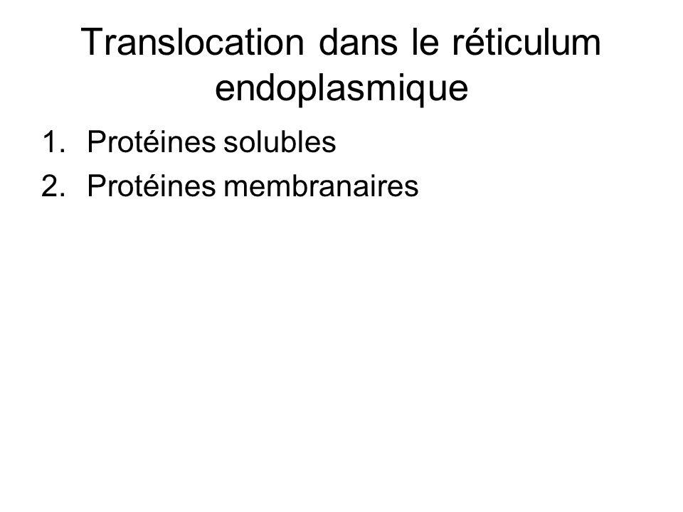 Translocation dans le réticulum endoplasmique 1.Protéines solubles 2.Protéines membranaires