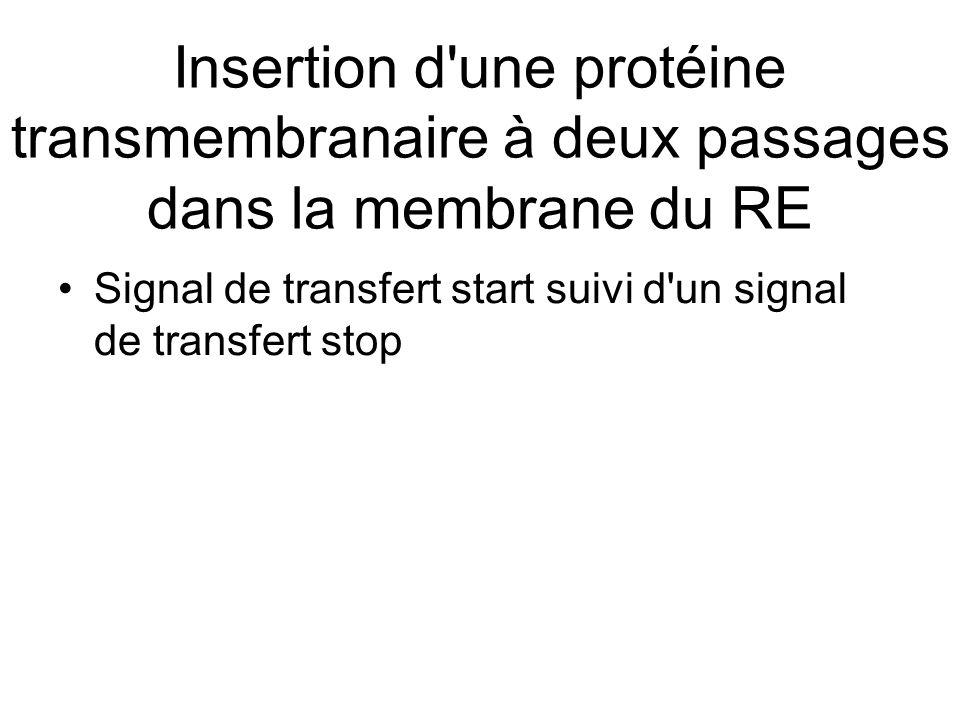 Insertion d une protéine transmembranaire à deux passages dans la membrane du RE Signal de transfert start suivi d un signal de transfert stop