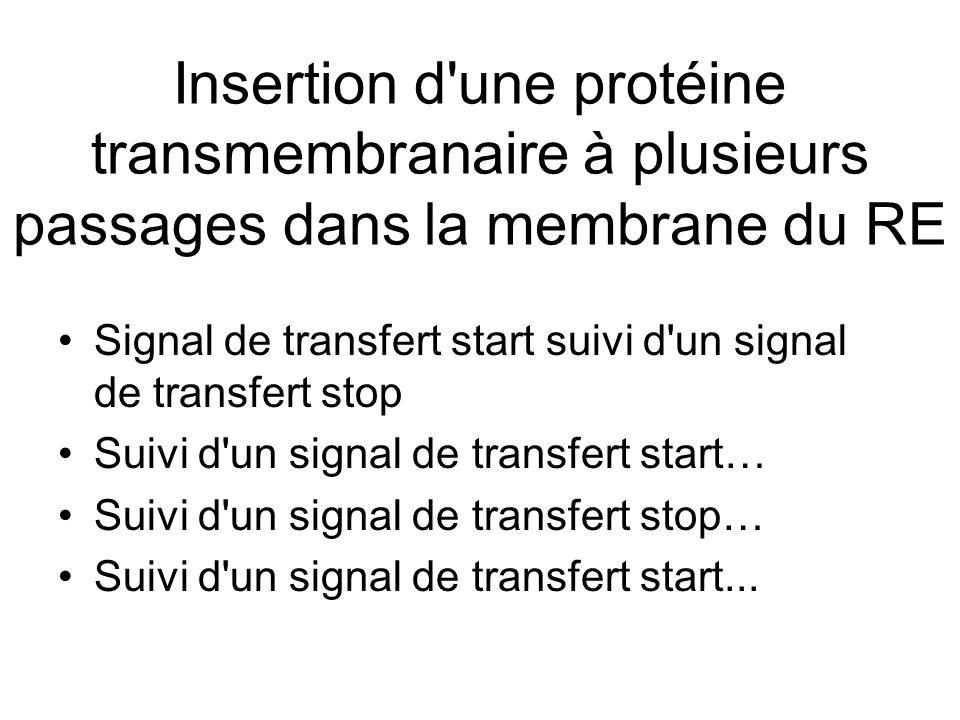 Insertion d une protéine transmembranaire à plusieurs passages dans la membrane du RE Signal de transfert start suivi d un signal de transfert stop Suivi d un signal de transfert start… Suivi d un signal de transfert stop… Suivi d un signal de transfert start...