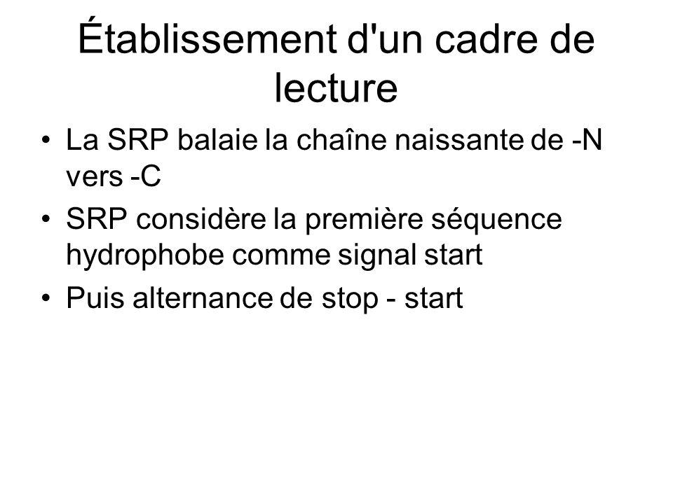 Établissement d un cadre de lecture La SRP balaie la chaîne naissante de -N vers -C SRP considère la première séquence hydrophobe comme signal start Puis alternance de stop - start