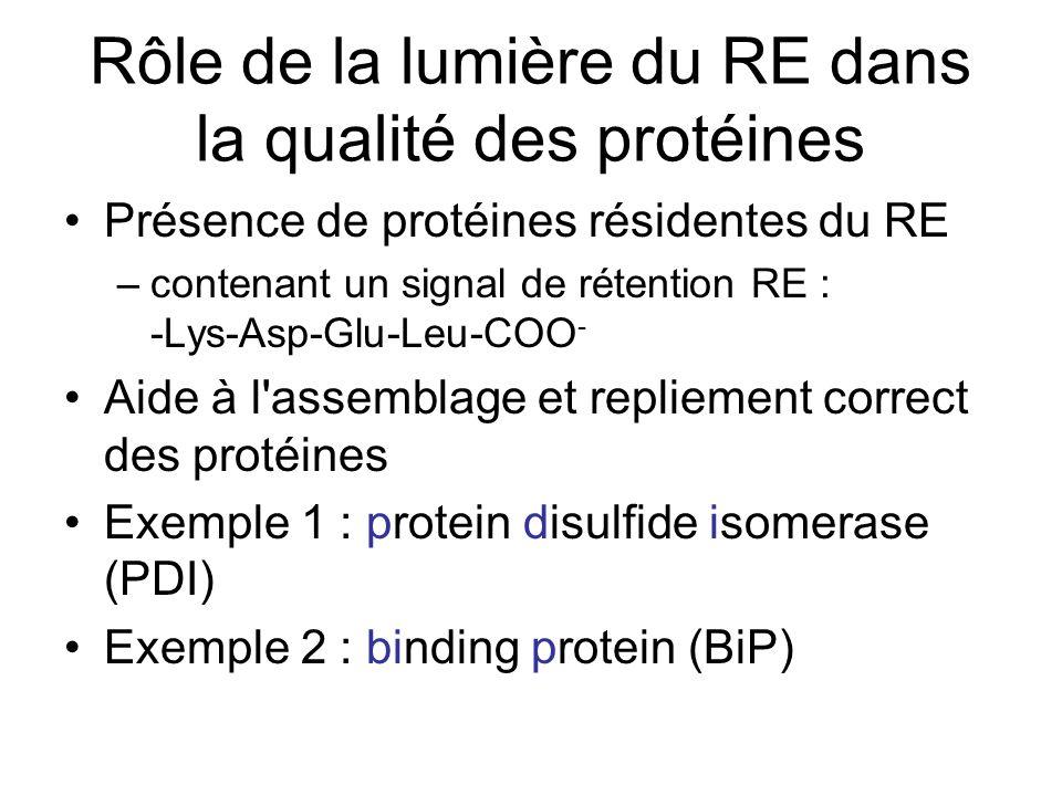Rôle de la lumière du RE dans la qualité des protéines Présence de protéines résidentes du RE –contenant un signal de rétention RE : -Lys-Asp-Glu-Leu-COO - Aide à l assemblage et repliement correct des protéines Exemple 1 : protein disulfide isomerase (PDI) Exemple 2 : binding protein (BiP)