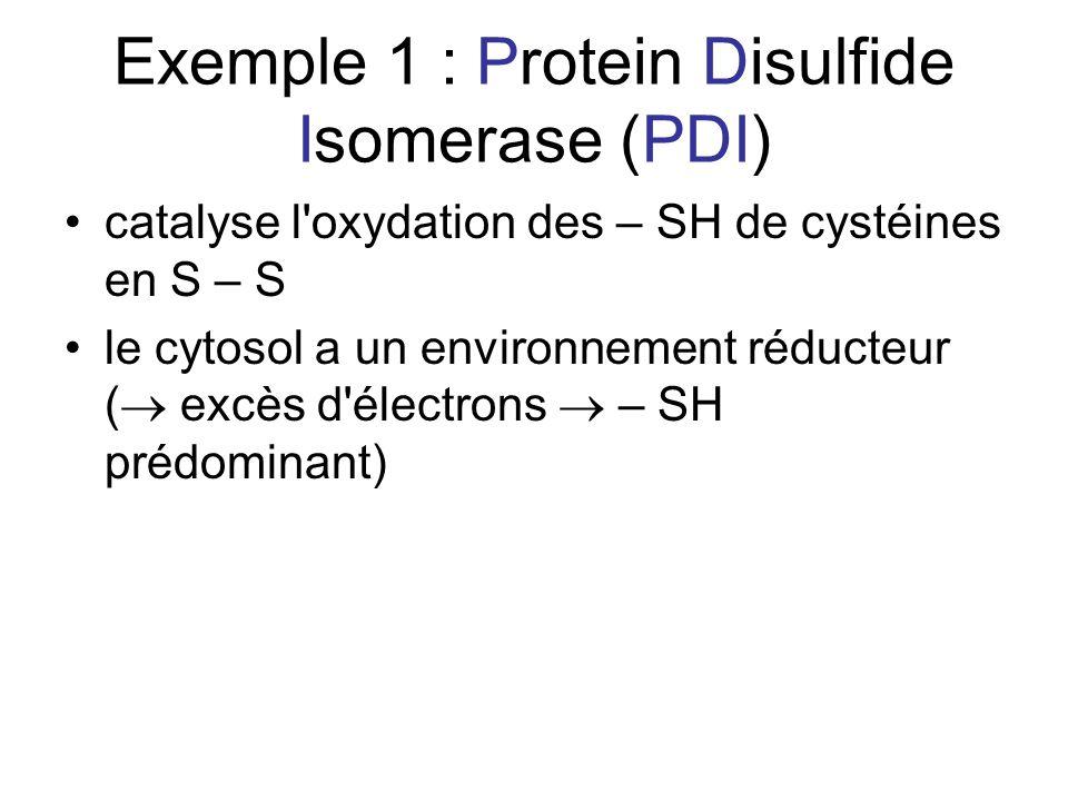 Exemple 1 : Protein Disulfide Isomerase (PDI) catalyse l oxydation des – SH de cystéines en S – S le cytosol a un environnement réducteur ( excès d électrons – SH prédominant)