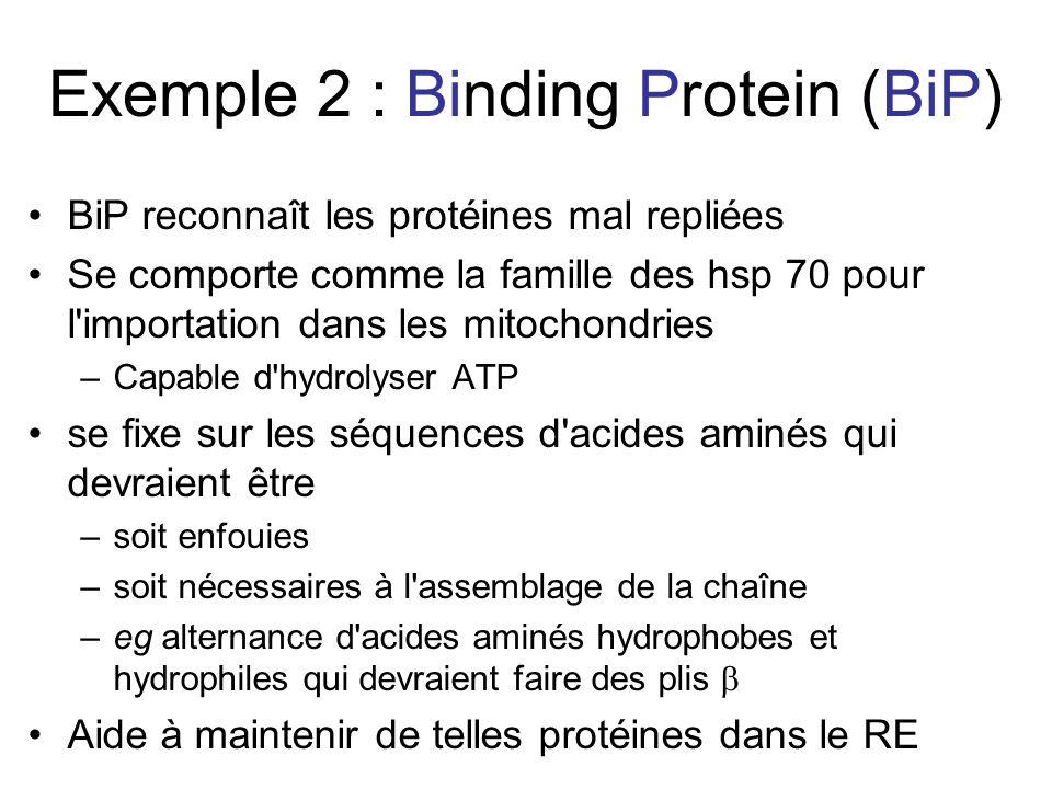 Exemple 2 : Binding Protein (BiP) BiP reconnaît les protéines mal repliées Se comporte comme la famille des hsp 70 pour l importation dans les mitochondries –Capable d hydrolyser ATP se fixe sur les séquences d acides aminés qui devraient être –soit enfouies –soit nécessaires à l assemblage de la chaîne –eg alternance d acides aminés hydrophobes et hydrophiles qui devraient faire des plis Aide à maintenir de telles protéines dans le RE
