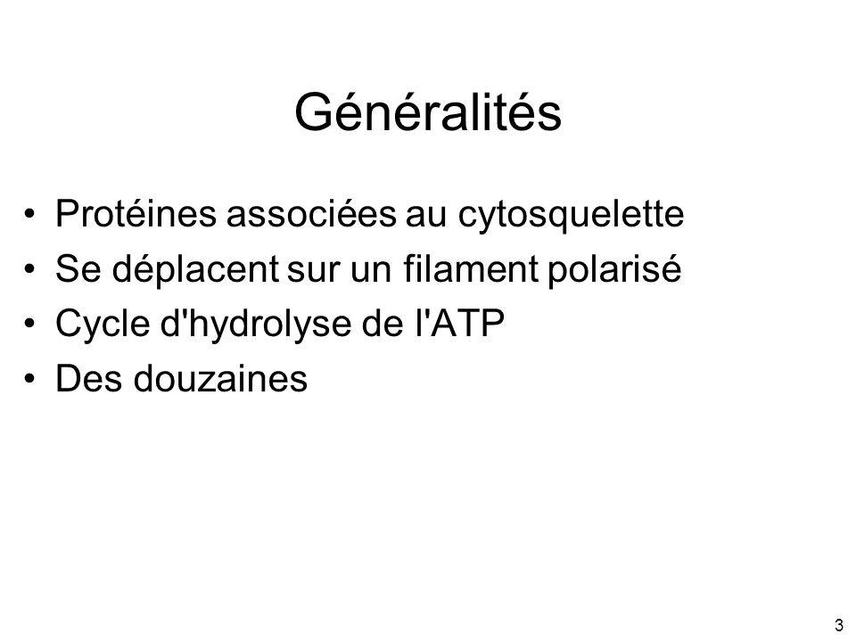3 Généralités Protéines associées au cytosquelette Se déplacent sur un filament polarisé Cycle d'hydrolyse de l'ATP Des douzaines