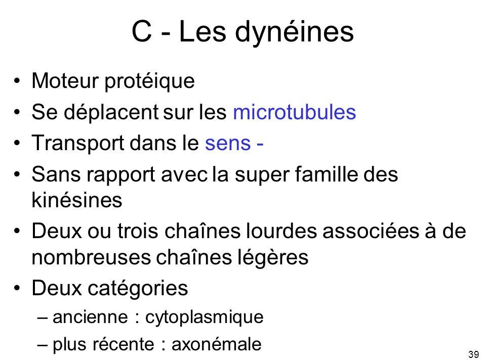 39 C - Les dynéines Moteur protéique Se déplacent sur les microtubules Transport dans le sens - Sans rapport avec la super famille des kinésines Deux