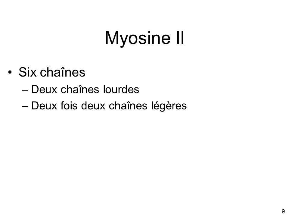 9 Myosine II Six chaînes –Deux chaînes lourdes –Deux fois deux chaînes légères
