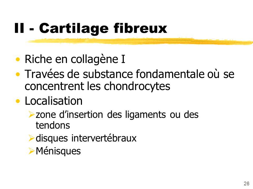 26 II - Cartilage fibreux Riche en collagène I Travées de substance fondamentale où se concentrent les chondrocytes Localisation zone dinsertion des l