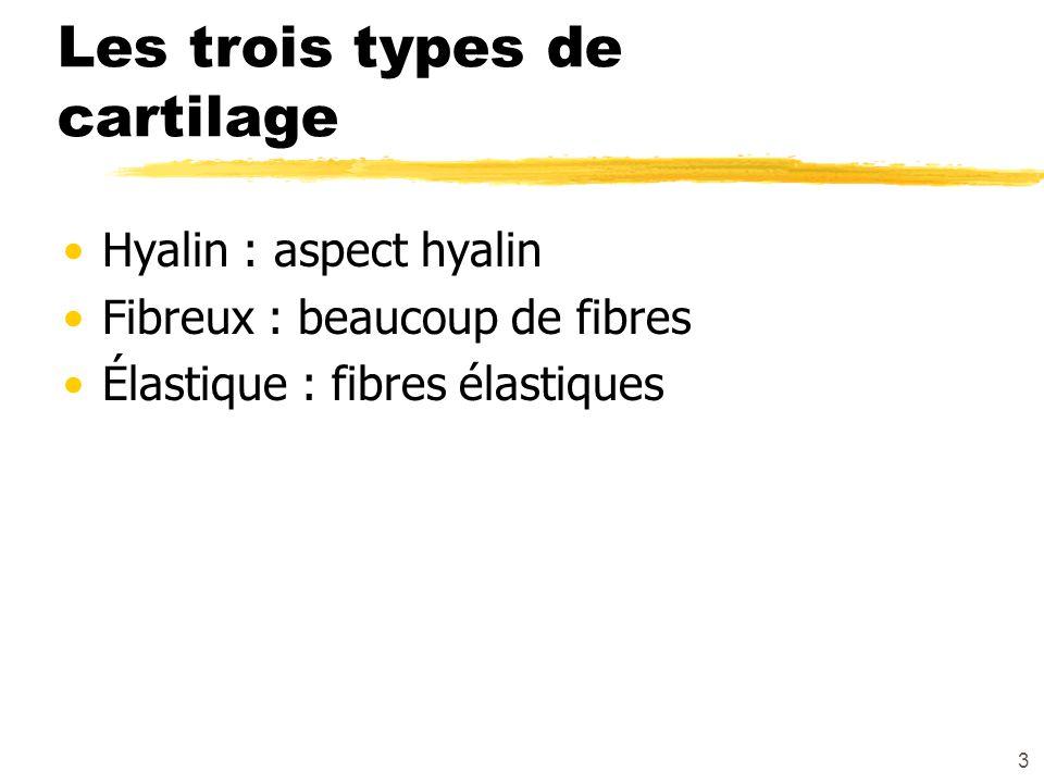 3 Les trois types de cartilage Hyalin : aspect hyalin Fibreux : beaucoup de fibres Élastique : fibres élastiques