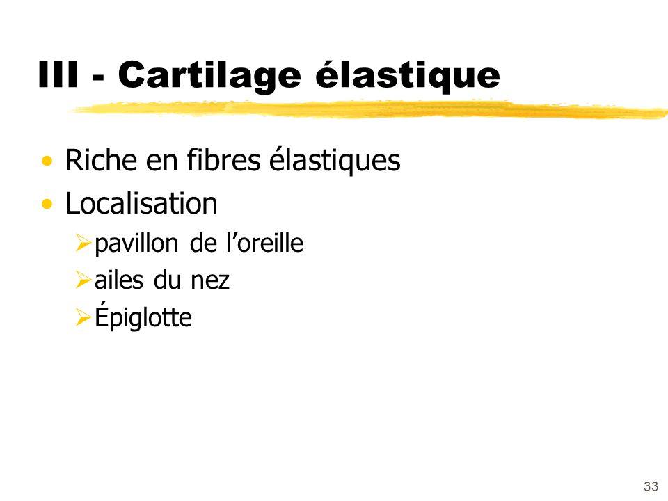 33 III - Cartilage élastique Riche en fibres élastiques Localisation pavillon de loreille ailes du nez Épiglotte