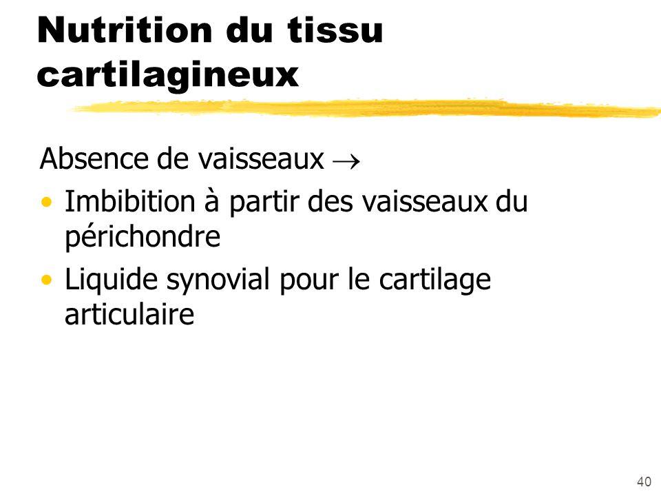 40 Nutrition du tissu cartilagineux Absence de vaisseaux Imbibition à partir des vaisseaux du périchondre Liquide synovial pour le cartilage articulai
