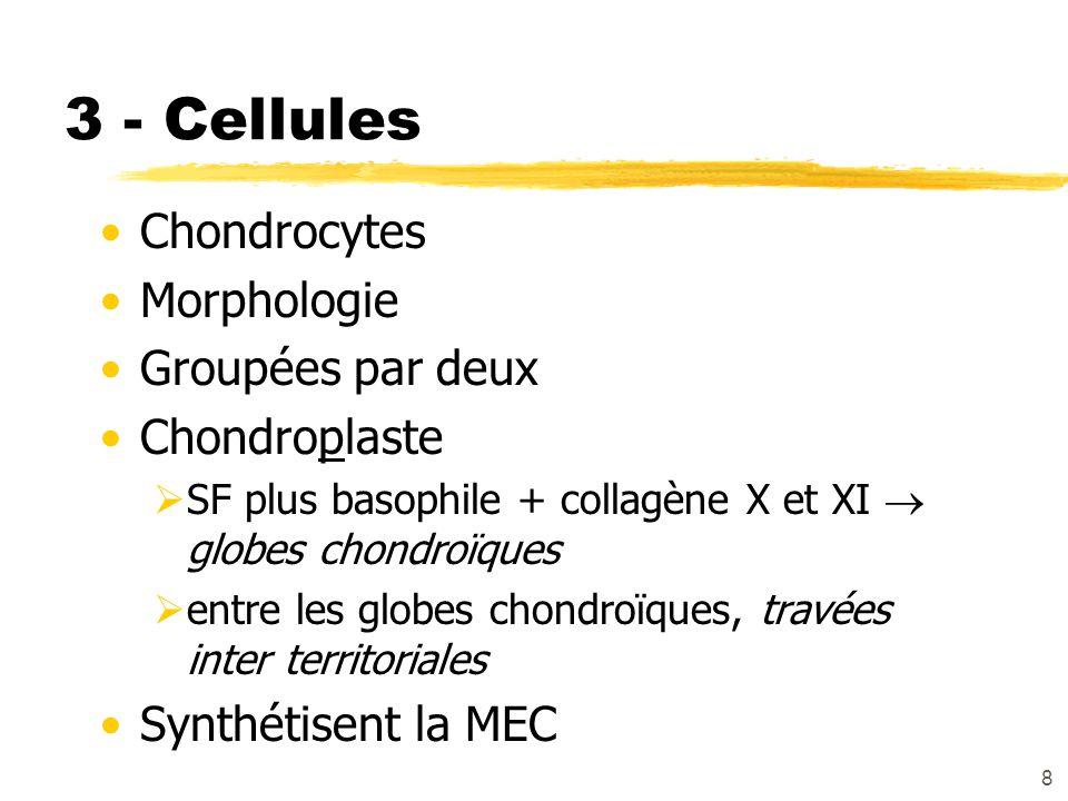 8 3 - Cellules Chondrocytes Morphologie Groupées par deux Chondroplaste SF plus basophile + collagène X et XI globes chondroïques entre les globes cho