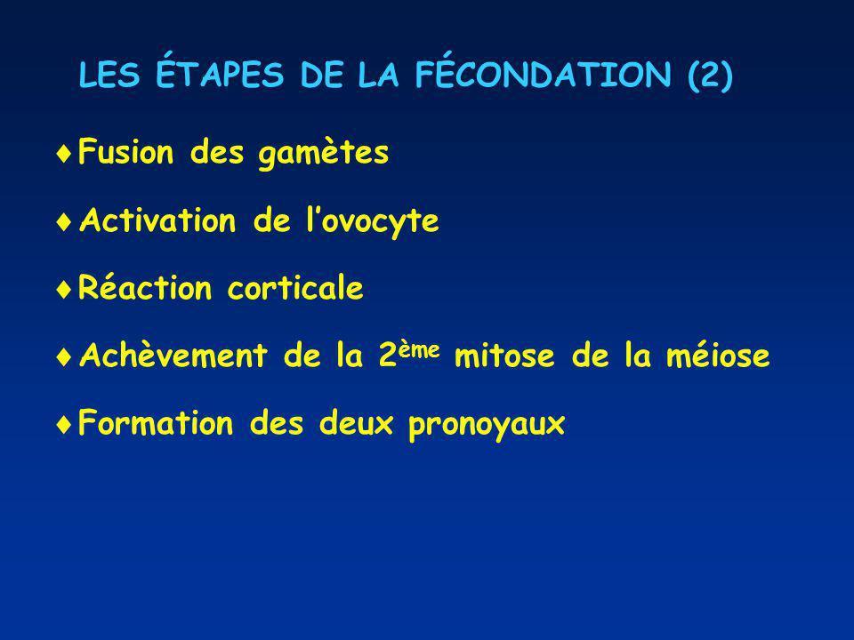 LES ÉTAPES DE LA FÉCONDATION (2) Fusion des gamètes Activation de lovocyte Réaction corticale Achèvement de la 2 ème mitose de la méiose Formation des deux pronoyaux