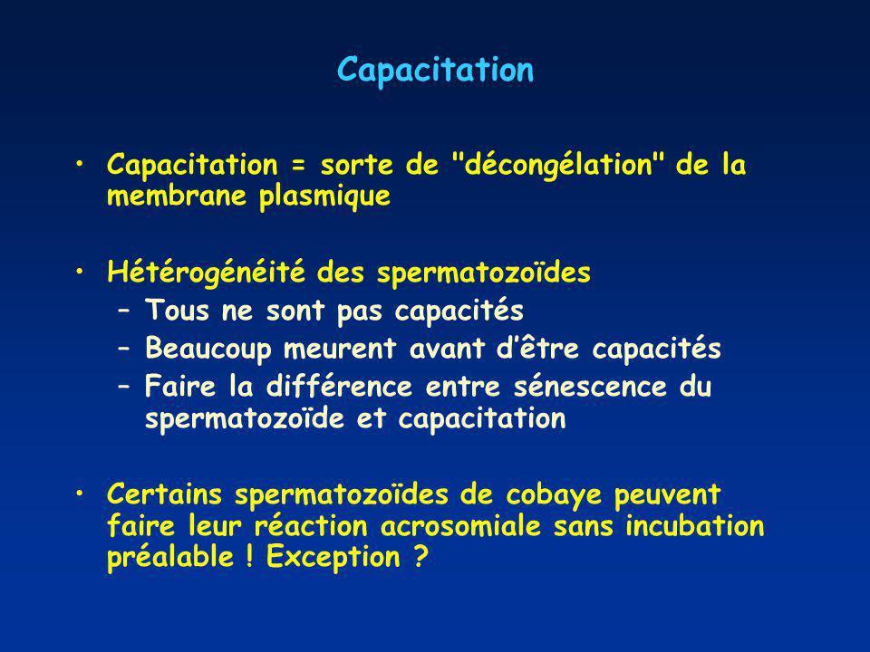 Capacitation Capacitation = sorte de décongélation de la membrane plasmique Hétérogénéité des spermatozoïdes –Tous ne sont pas capacités –Beaucoup meurent avant dêtre capacités –Faire la différence entre sénescence du spermatozoïde et capacitation Certains spermatozoïdes de cobaye peuvent faire leur réaction acrosomiale sans incubation préalable .