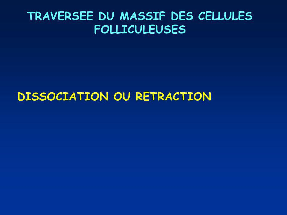 TRAVERSEE DU MASSIF DES CELLULES FOLLICULEUSES DISSOCIATION OU RETRACTION
