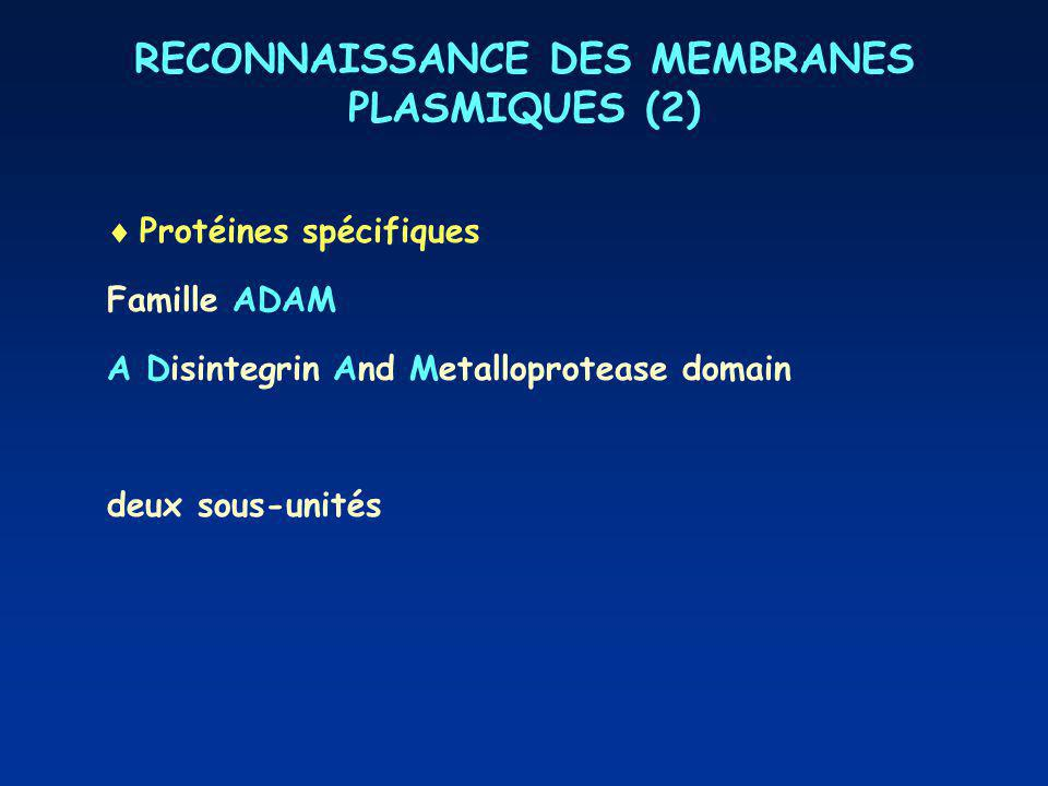 RECONNAISSANCE DES MEMBRANES PLASMIQUES (2) Protéines spécifiques Famille ADAM A Disintegrin And Metalloprotease domain deux sous-unités : Fusion : Fixation
