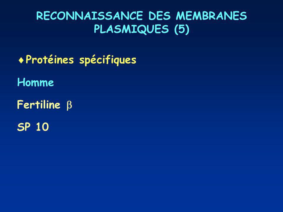 RECONNAISSANCE DES MEMBRANES PLASMIQUES (5) Protéines spécifiques Homme Fertiline SP 10