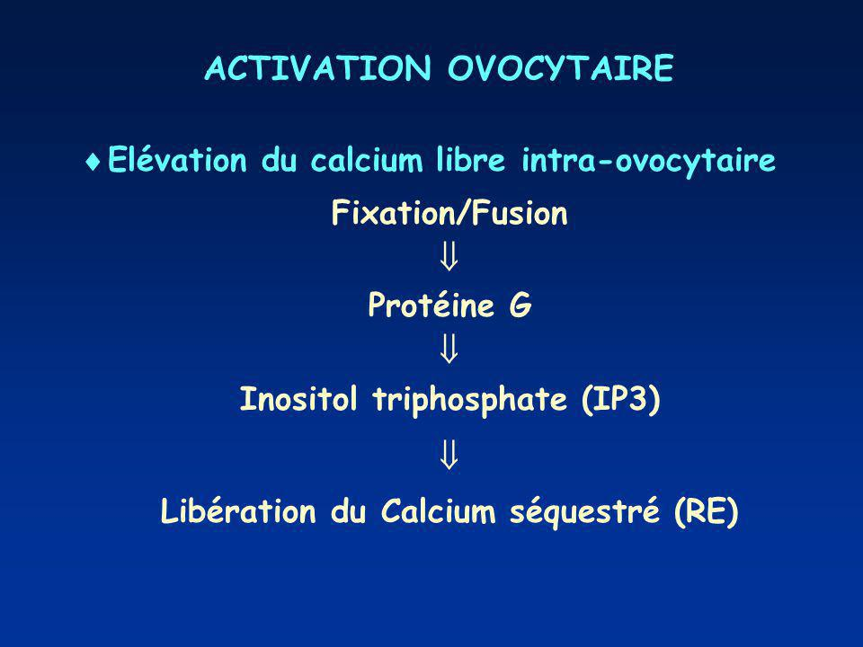 ACTIVATION OVOCYTAIRE Elévation du calcium libre intra-ovocytaire Fixation/Fusion Protéine G Inositol triphosphate (IP3) Libération du Calcium séquestré (RE)
