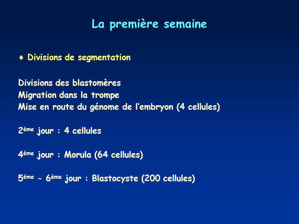 La première semaine Divisions de segmentation Divisions des blastomères Migration dans la trompe Mise en route du génome de lembryon (4 cellules) 2 èm