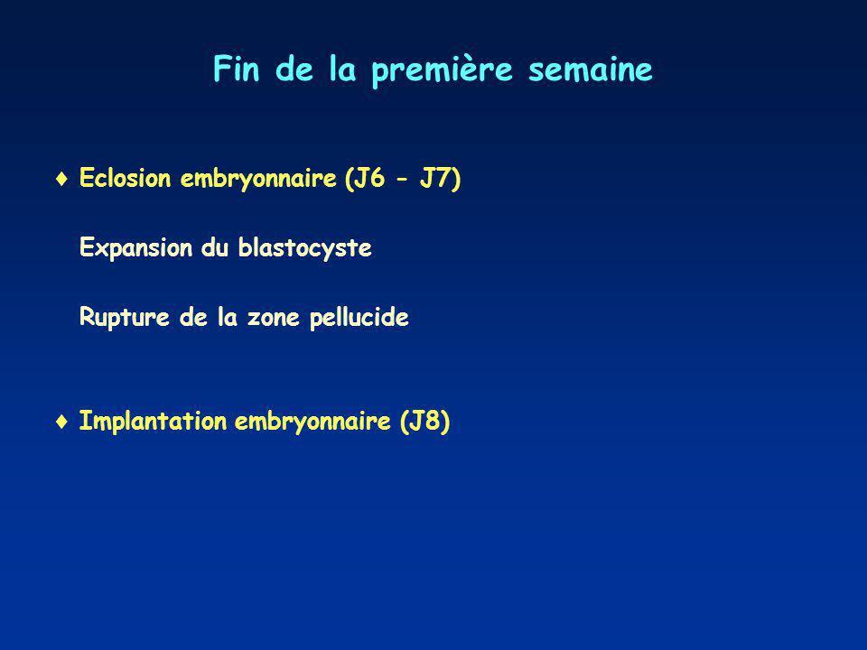 Fin de la première semaine Eclosion embryonnaire (J6 - J7) Expansion du blastocyste Rupture de la zone pellucide Implantation embryonnaire (J8)